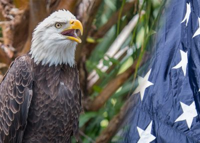 FREE Admission For Military at the OKC Zoo all November!