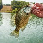 Ask an Angler: Virtual Fishing Course (Crappie Fishing Tips)