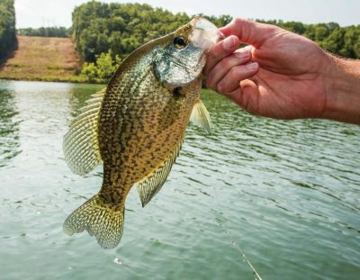 Ask an Angler: Virtual Fishing Course (Crappie Fishing Tips)