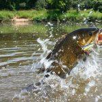 Ask an Angler: Virtual Fishing Courses (Pre-Spawn Bass Fishing Tips)
