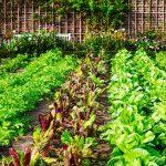Spring Gardening Basics
