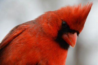 Adult Birding Walk Part 2!
