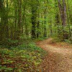 Wildcrafting Walk