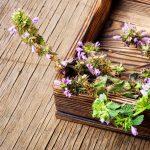 Kitchen Cabinet and Backyard Herbalism