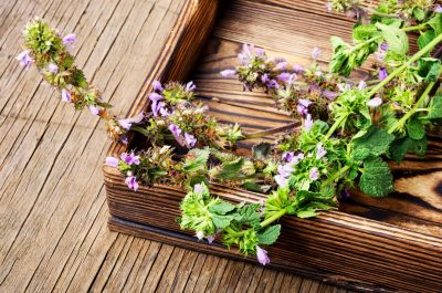 Kitchen Cabinet and Backyard Herbalism