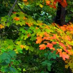Colors of Fall: Tree Identification Tour